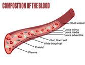 Kan oluşumunu — Stok Vektör