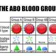 The ABO blood group diagram - Stock Vector