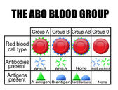 The ABO blood group diagram — Stock Vector