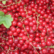 Red currant background — Stock Photo