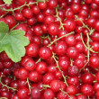 Red currant background - Stock Photo