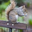 Squirrel — Stock Photo #5505759
