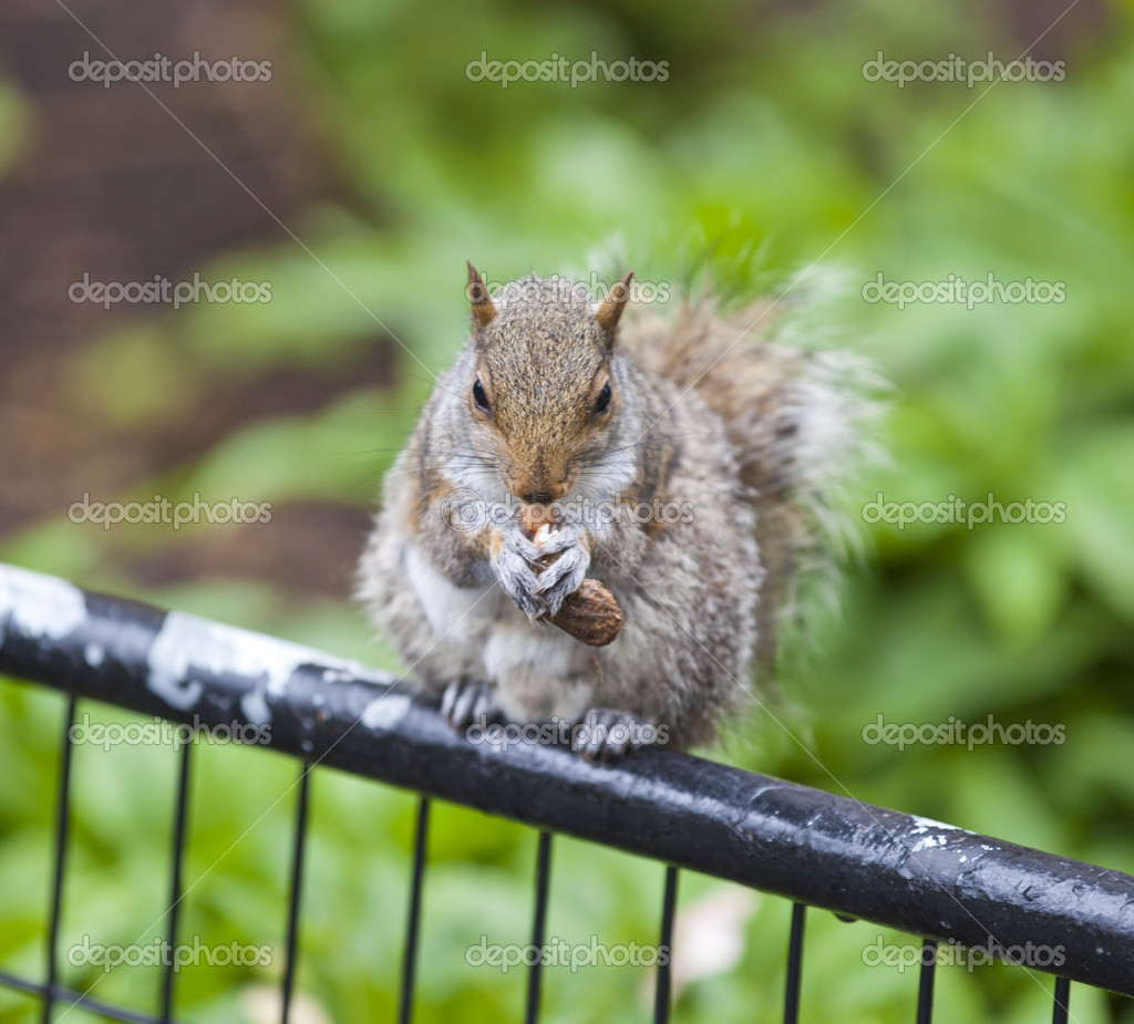 Squirrel — Stock Photo #5505629