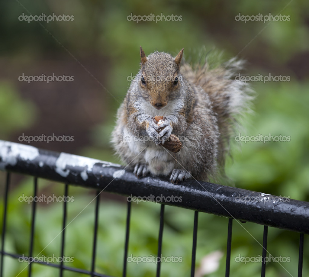 Squirrel  Stock Photo #5505655