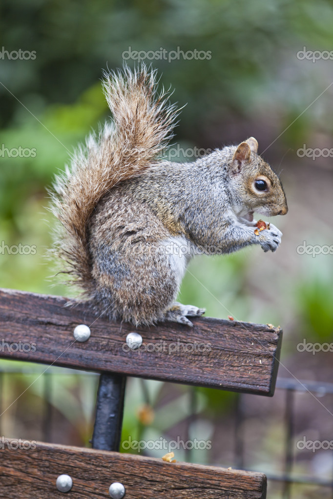 Squirrel  Stock Photo #5505759