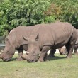Royalty-Free Stock Photo: Rhinoceros