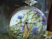 Hours of wild flowers. — Stock Photo