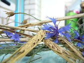 Spikelets and cornflowers — Stock Photo