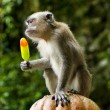 Stock Photo: Monkey eating ice cream