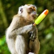 Monkey eating ice cream — Stock Photo