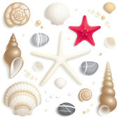 Seashell set — Vector de stock