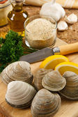 Fresh Littleneck Clams — Stock Photo