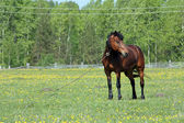 Lindo cavalo num prado verde — Foto Stock