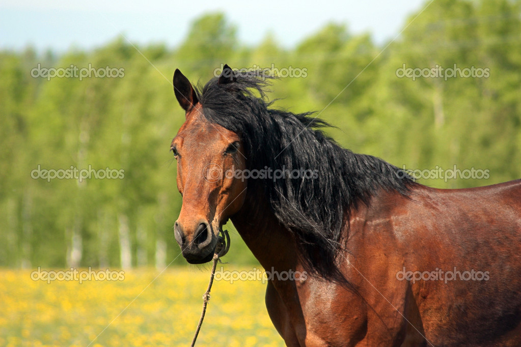 Brown horse grazing in a pasture — Stock Photo #6397687