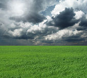 Green grass and blue cloudly sky — Stock Photo