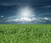 Green grass and blue cloudly sky — Fotografia Stock