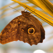 Butterfly on nature background — Stock Photo #6013509