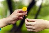 Hands with dandelion flower — Stock Photo