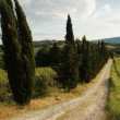 Chianti panorama - Stock Photo