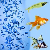 热带鱼 — 图库照片