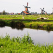 Dutch windmills in Netherlands - Stock Photo