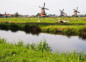 Dutch windmills in Netherlands — Stock Photo