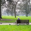 Stock Photo: Min garden with pigeons