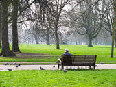 Man in the garden with the pigeons — Stock Photo