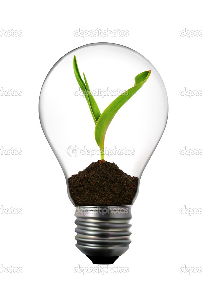 Renewable Energy Light Bulb With Green Plant Inside Stock Photo Ronstik 5572079