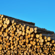 Heap of timber logs — Stock Photo