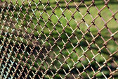 Fence Netting — Stock Photo