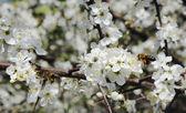 2 つの蜂 — ストック写真