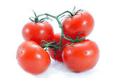 Branch of tomato — Stock Photo