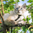 Cat sits on a tree — Stock Photo