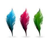 Color feathers — Stock Vector