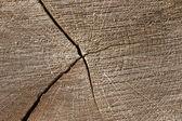 Holz. Ein Querschnitt durch einen Baumstamm. — Stock Photo