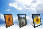группа фотографии природы в кадрах на фоне неба — Стоковое фото