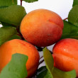 Juicy apricots — Stock Photo