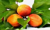 Sappige abrikozen — Stockfoto