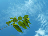 Bright leaf and sky — Stock Photo