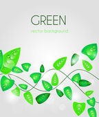 Green leafs — Stock Vector