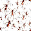 Royalty-Free Stock Vector Image: Red ants