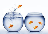 Goldfish jumping out of the water — Stock Photo