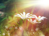 Grass and flower field under the morning sunlight — Stock Photo