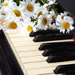 Camomiles on the old piano — Stock Photo