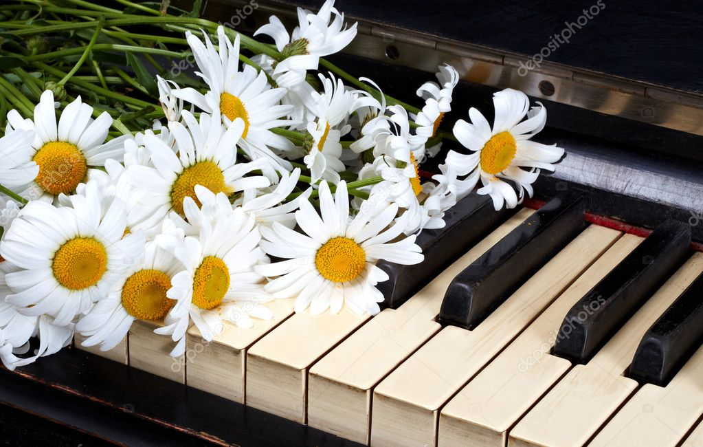 Camomiles on the old piano — Stock Photo #6682275