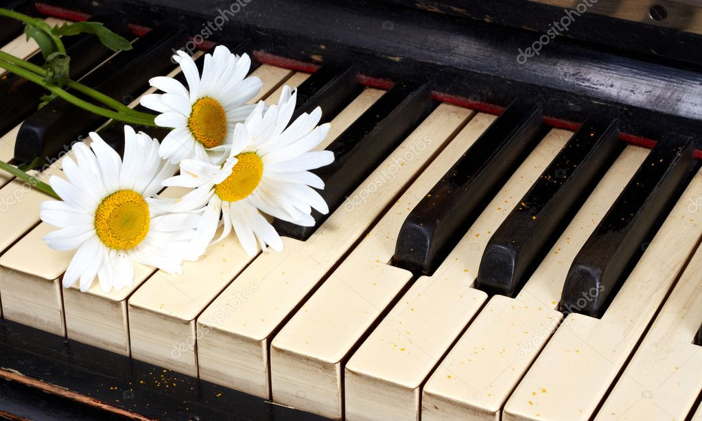 Camomiles on the old piano  Stock Photo #6682301
