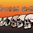 Different types of human skulls by evolution - Stock Vector