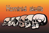 Different types of human skulls by evolution — Stock Vector