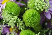 Green garden flowers — Stock Photo